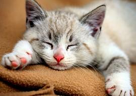 Kočičí jídelníček pod lupou