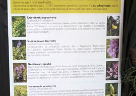 Výstava orchideí v Botanickej záhrade Košice